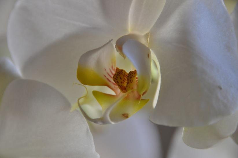 Blanca flor, Flickr, Toni Castillo