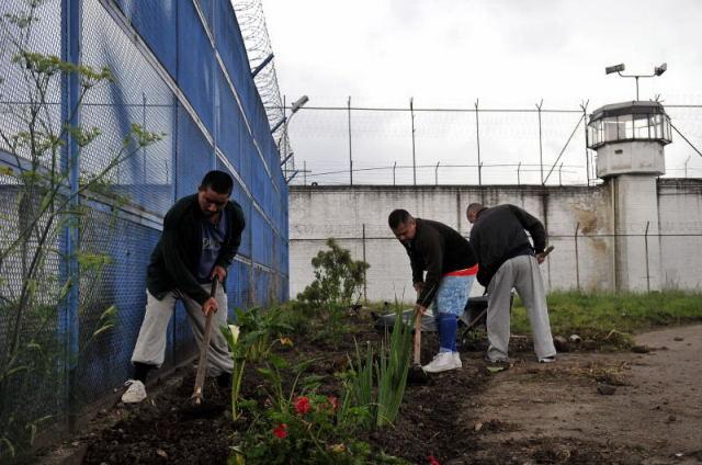 El cultivo de hortaliza es una de las terapias utilizadas para ocupar a los internos.