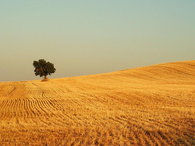 Lonely tree, Flickr, Jule_Berlin