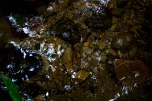 Naturaleza (FotografíaJ. P. A.)