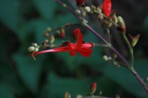 Flora de Colombia (Fotografía: Catalina Giraldo P.)