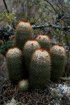 cactus2-200x300.jpg