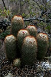 Cactus (Fotografía Catalina Giraldo P.)