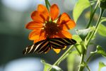 Butterfly-Flickr-Paul-Wever.jpg
