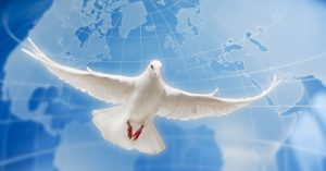 paz-paloma-global