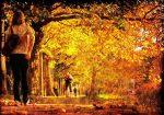 Golden-autumn-morning-in-Dublin-Flickr-Steve-h.jpg