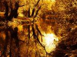 River-of-gold-Flickr-Steven-Heron.jpg