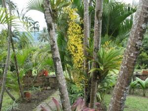 Orquídea que florece en navidad (Fotografía: Eduardo)