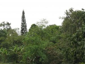 Exuberante naturaleza tropical (Fotografía: Eduardo)
