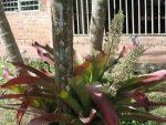 Flores-de-la-finca-julio-de-2012-006-300x225.jpg