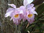 Flores-de-la-finca-julio-de-2012-019-300x225.jpg