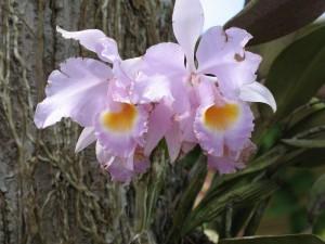 Orquideas - Fotografía: E.P.M.)