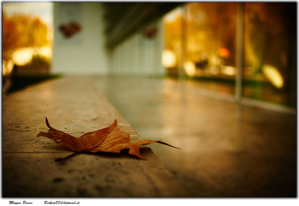 Flickr, Moyan Brenn