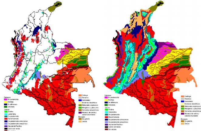 Transformación de los ecosistemas naturales de Colombia por intervención de la actividad humana. A la izquierda en blanco los ecosistemas intervenidos, a la derecha cada color representa un ecosistema diferente. De la abundancia a la escasez. Dr. Germán Márquez, departamento de ciencias naturales e IDEA, UNAL. 2001.