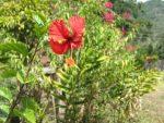 Flores-de-la-finca-julio-de-2012-025-300x225.jpg