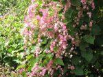 Flores-de-la-finca-julio-de-2012-020-300x225.jpg