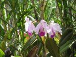 Flores-de-la-finca-julio-de-2012-039-300x225.jpg