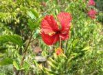 Flores-de-la-finca-julio-de-2012-025-300x218.jpg