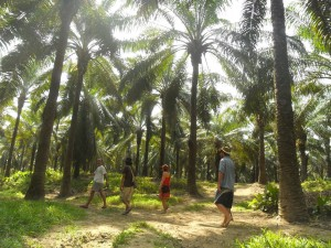 The African Palm Tree forrest in Aracataca, hostel The Gypsy Residence