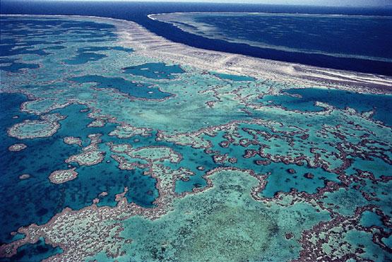 La triste historia de los arrecifes de coral   Blogs El Espectador