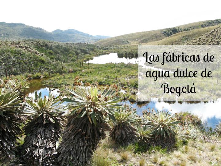 Páramo de Guacheneque. Laguna del mapa/ Foto: Alejandro Rueda
