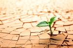 desert-plant-iStock_000016503308web2.png