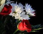 rosas-y-margaritas.jpg