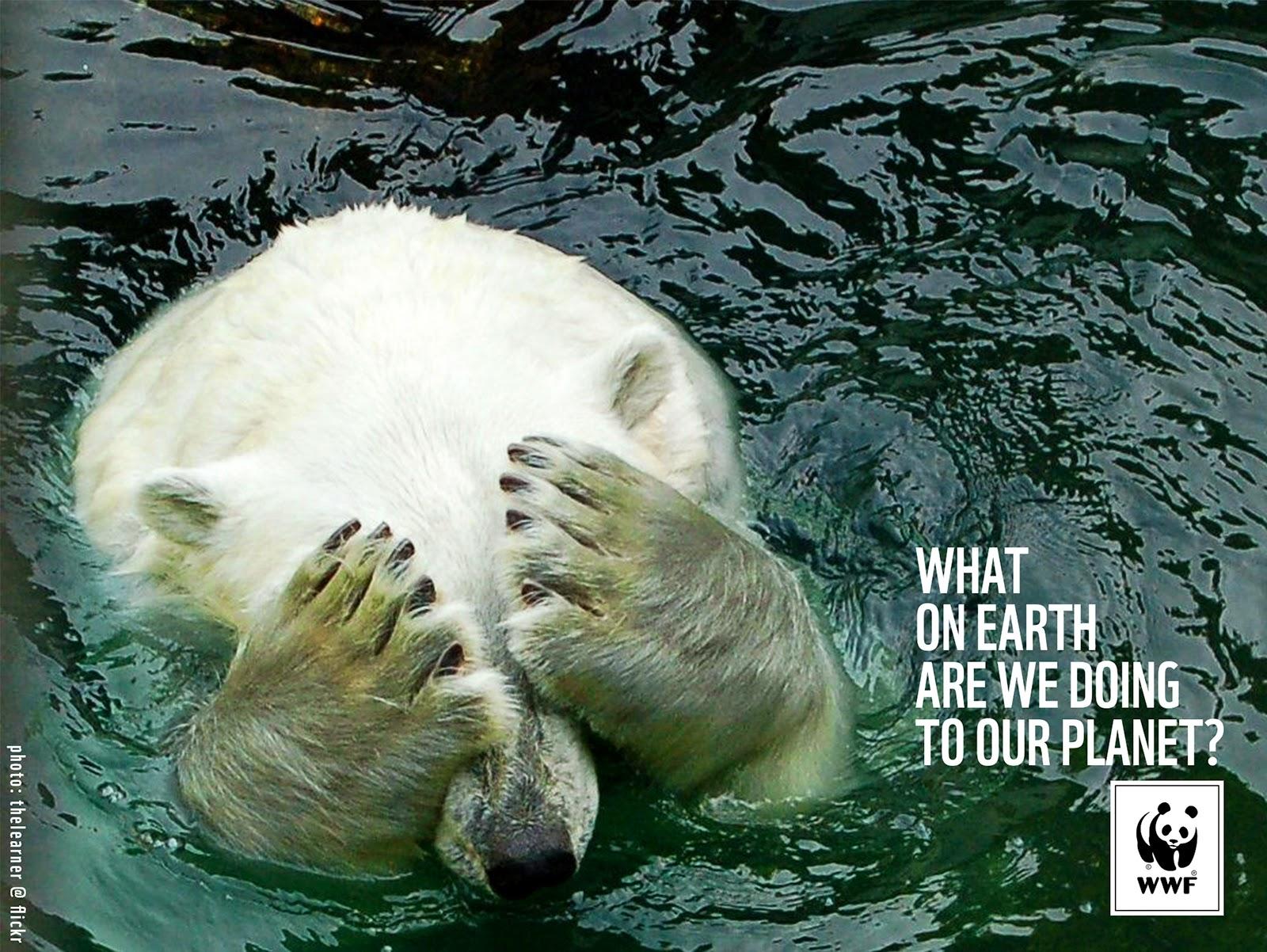 WWF-Polar-Bear