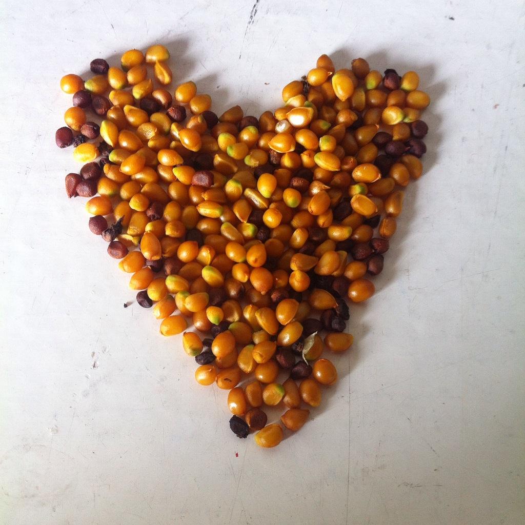 Las semillas de las maravillas