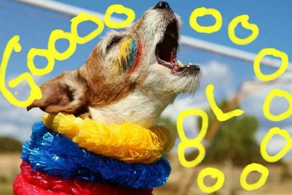 Uggie celebrando gol Colombia
