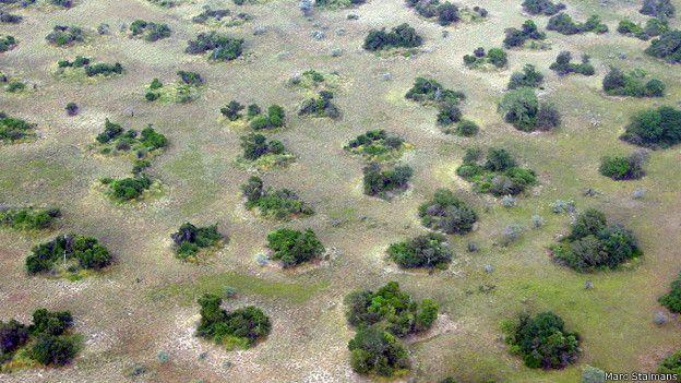 Las regiones donde hay vegetación indican dónde hay termitas.