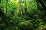 bosque-de-agua.jpg