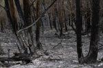 incendio-galicia-4-640x640x80.jpg