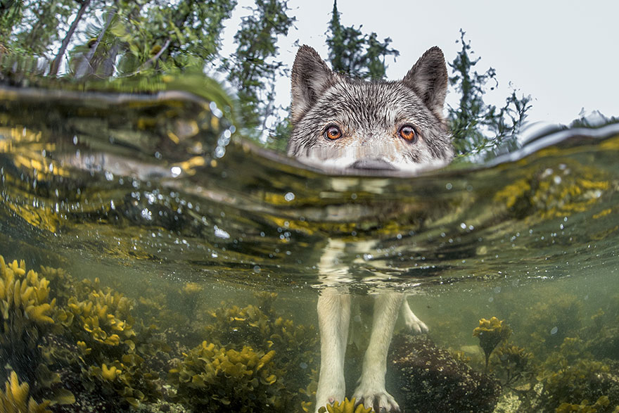national-geographic-photo-of-the-day-internet-favorites-2015-25__880