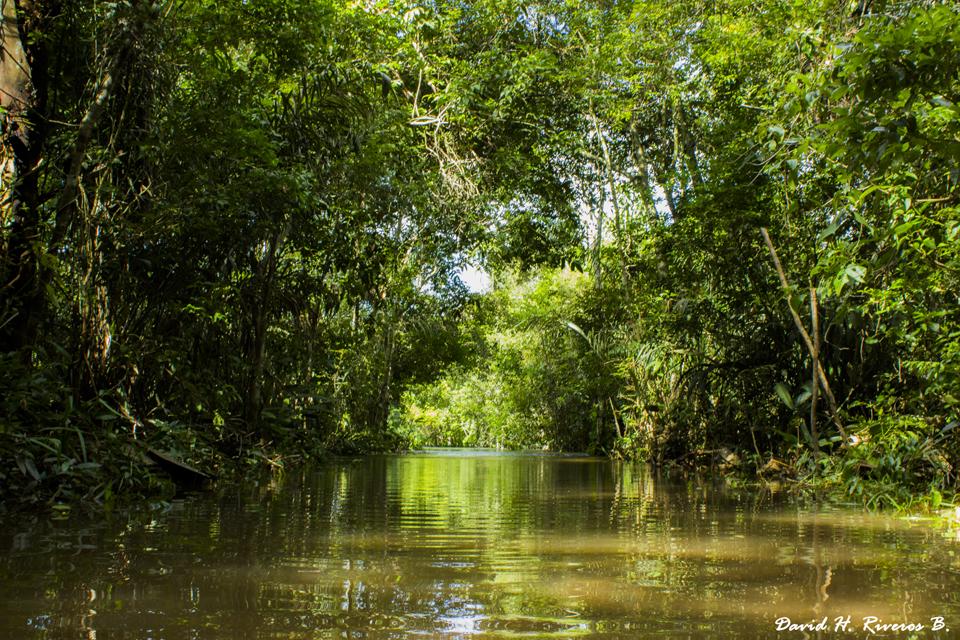 David Hernando Riveros Barbosa Humedal La Primavera, Vichada