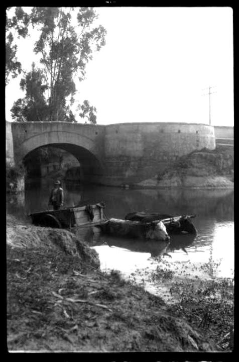 [Hombre sobre carro de tracción animal en un río] 193