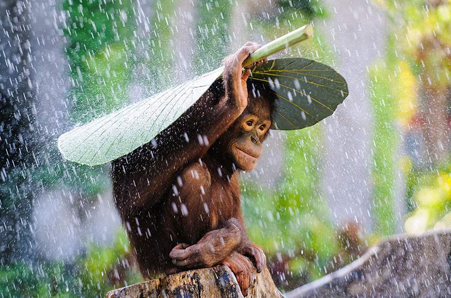 animales-paraguas-naturales-2