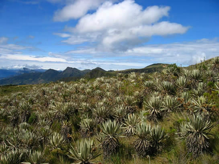 paramo_pisba-Absolut-Colombia720