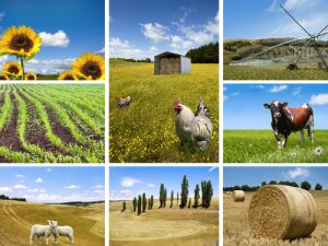 Agricultural concepts