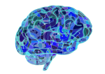 brain-951874_1280-300x212.png