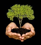 reforestación.jpg