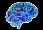 brain-951874_1280.png