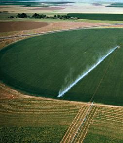Fotografía: agrícola.cl