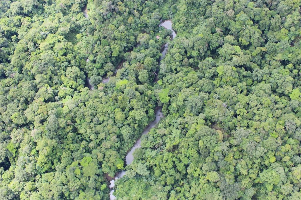 Bosque y quebrada en el sur de Chocó. Foto: Cortesía Fondo Acción.