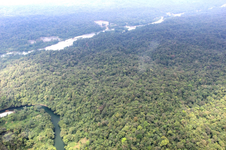 El bosque sobre el R°o Cajambre
