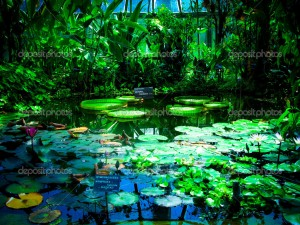 lilies greenhouse