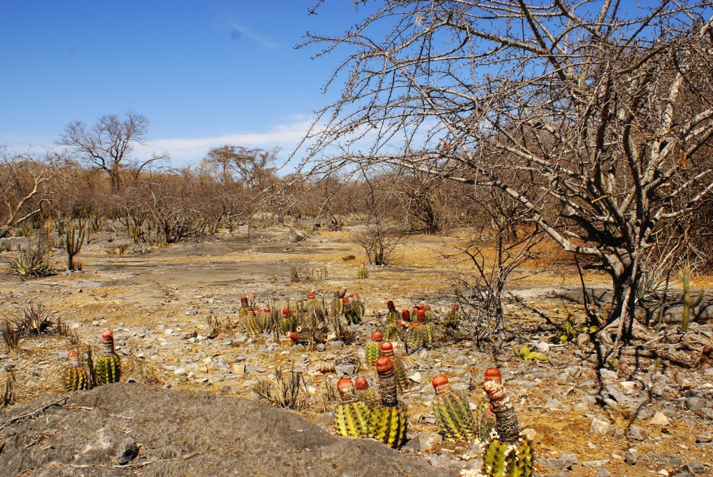 Parque estadual da mata seca de Minas Gerais, Brasil. Foto: Flavia Pezzini.