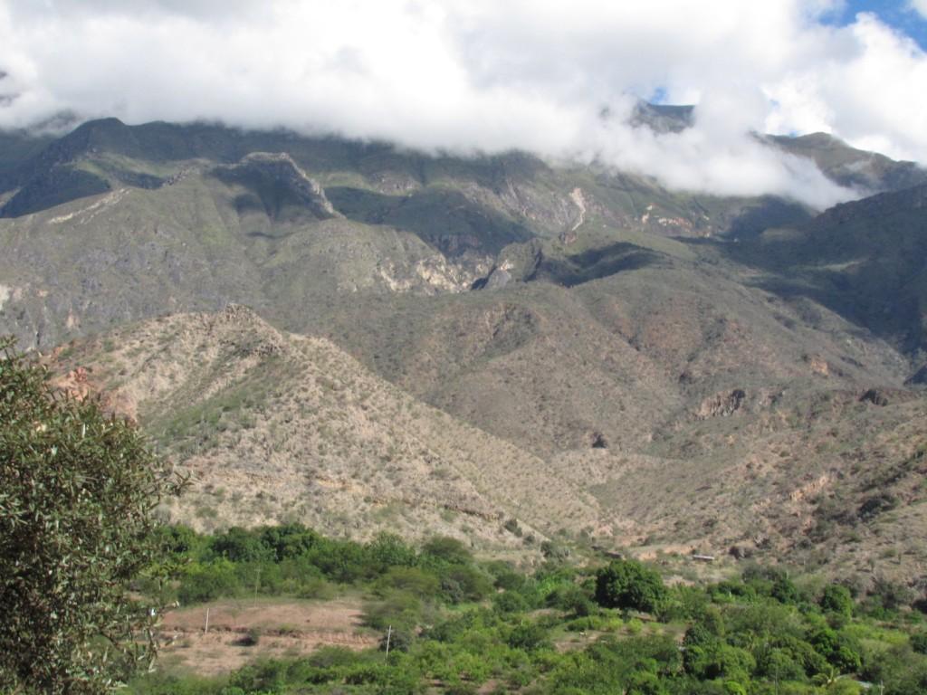 Bosques secos de la Cuenca del Marañón, Perú- Foto: Jose Luis Marcelo.