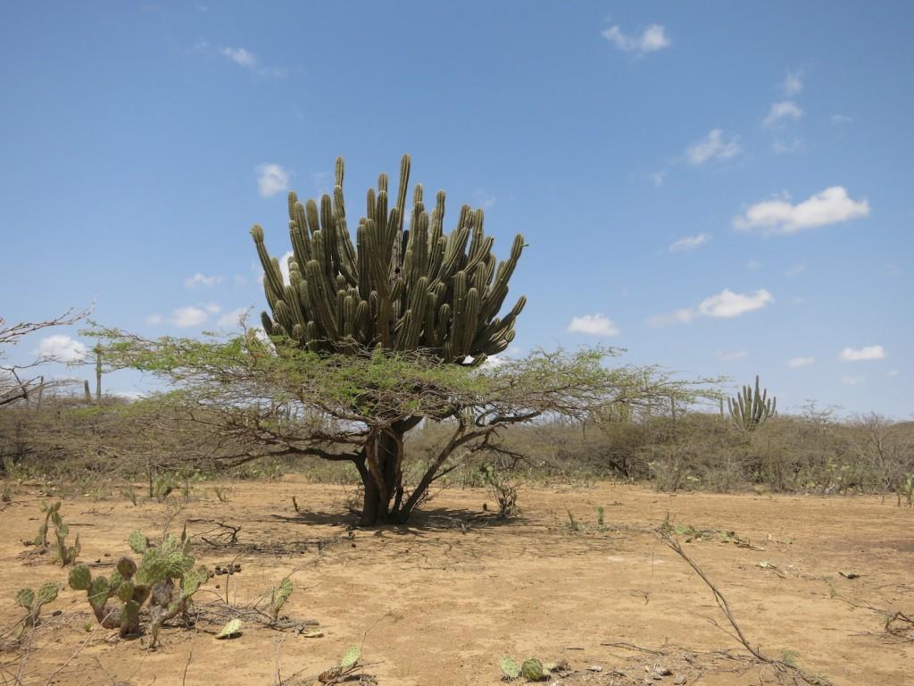 Bosques secos ubicados en el municipio de Maicao, La Guajira, Colombia. Foto: Karina Banda.