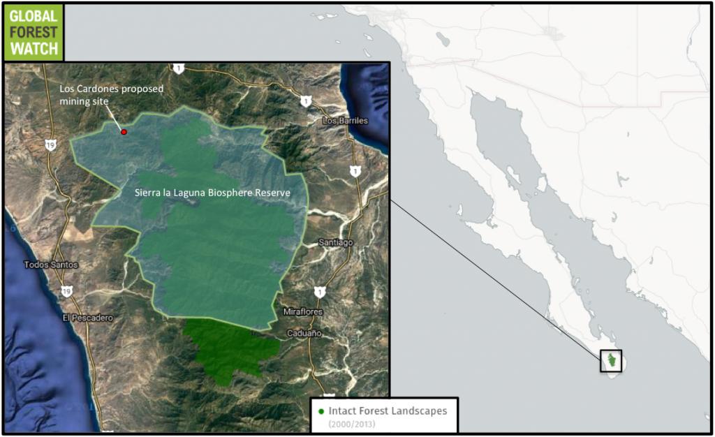 """Global Forest Watch muestra que la Reserva de la Biosfera Sierra la Laguna contiene el único paraje de Bosque Intacto de Baja California. Fuente de datos: Greenpeace, la Universidad de Maryland, el Instituto de Recursos Mundiales y Transparent World. """"Parajes de Bosque Intacto. 2000/2013"""" Accedido a través de Global Forest Watch el 5 de agosto, 2016. www.globalforestwatch.org"""